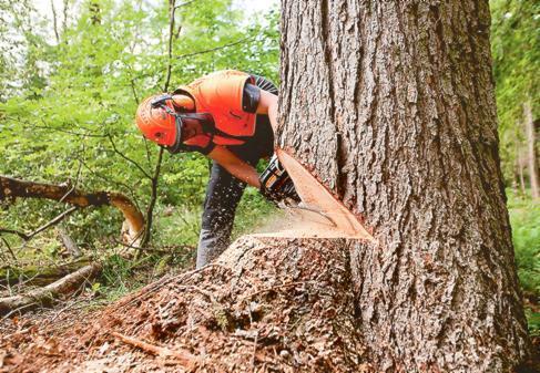 Gozdarstvo Šrajles