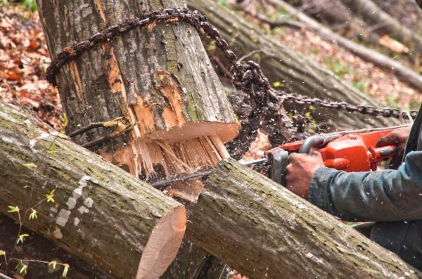 Sečnja in spravilo lesa Florijan Bašelj s.p.