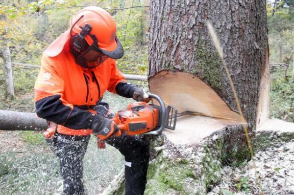 Sečnja in spravilo lesa Blaž Bobnar s.p.