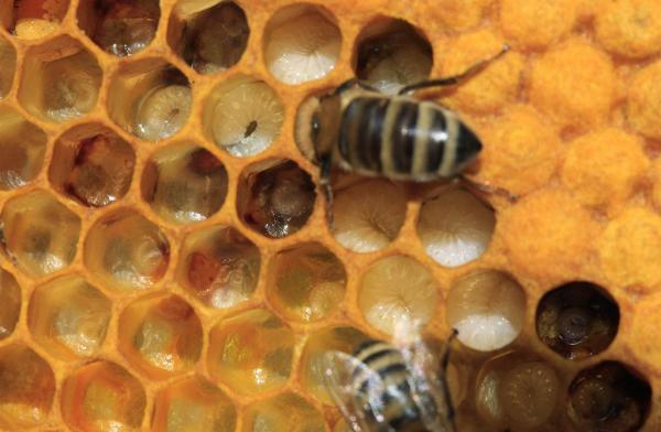 Izdelava čebelarske opreme, Marjan Maučec s.p.