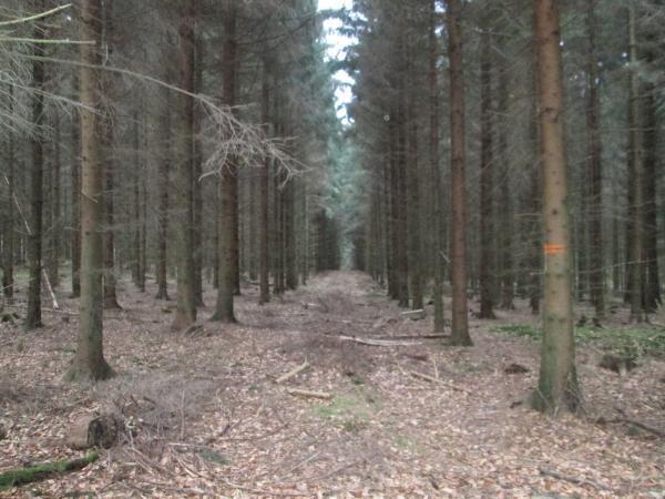 Gozdarske storitve, Maks Boldin s.p.