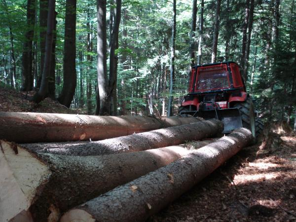 Gradbene in gozdarske storitve Aljaž Meglič s.p.