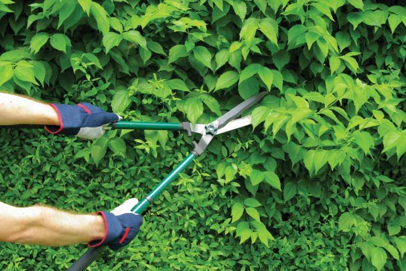 Drvarji, vzdrževanje okolice in zelenih poovršin