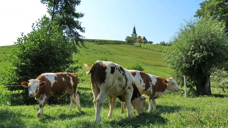 Odkup in prodaja govedi, Bojan Radovan s.p.