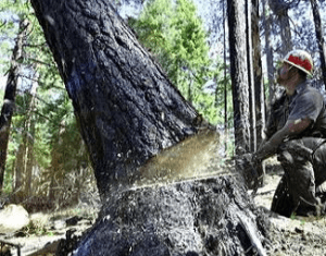 Gozdarstvo in arboristika EM, Enci Miran s.p.