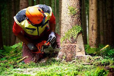 Rupnik d.o.o., sečnja, prevoz in odkup lesa