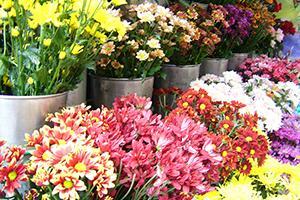 Cvet Obale d.o.o., trgovina na debelo s cvetjem