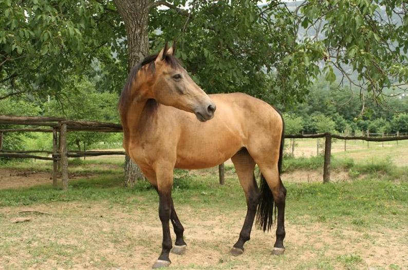 Konjeniški klub Mandrija