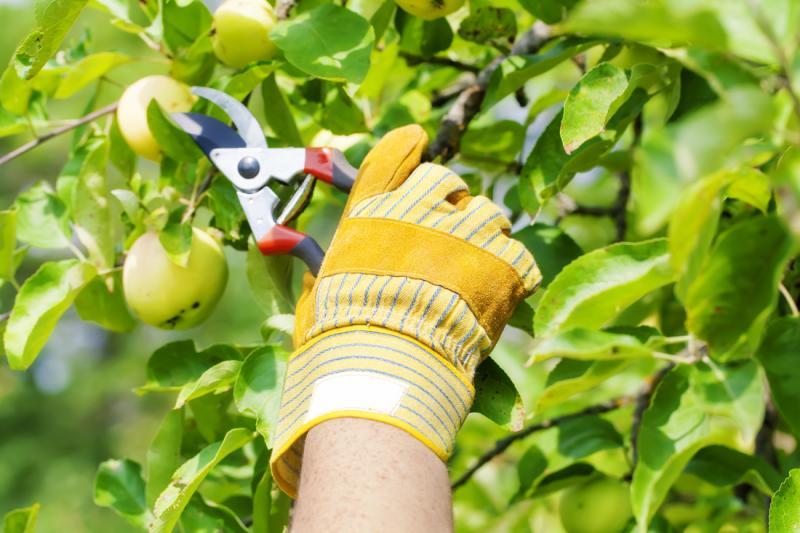 Proarbo d.o.o., urejanje okolice in obrezovanje dreves