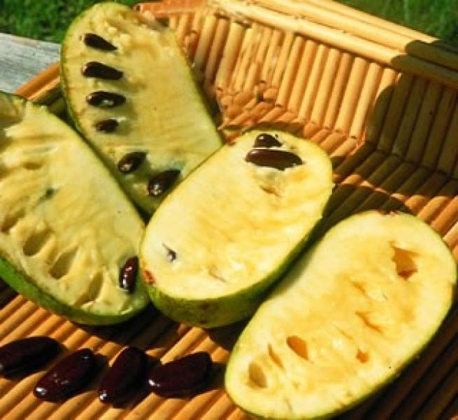 Asimina Fruit - Indijanska banana, Akvaristika d.o.o.