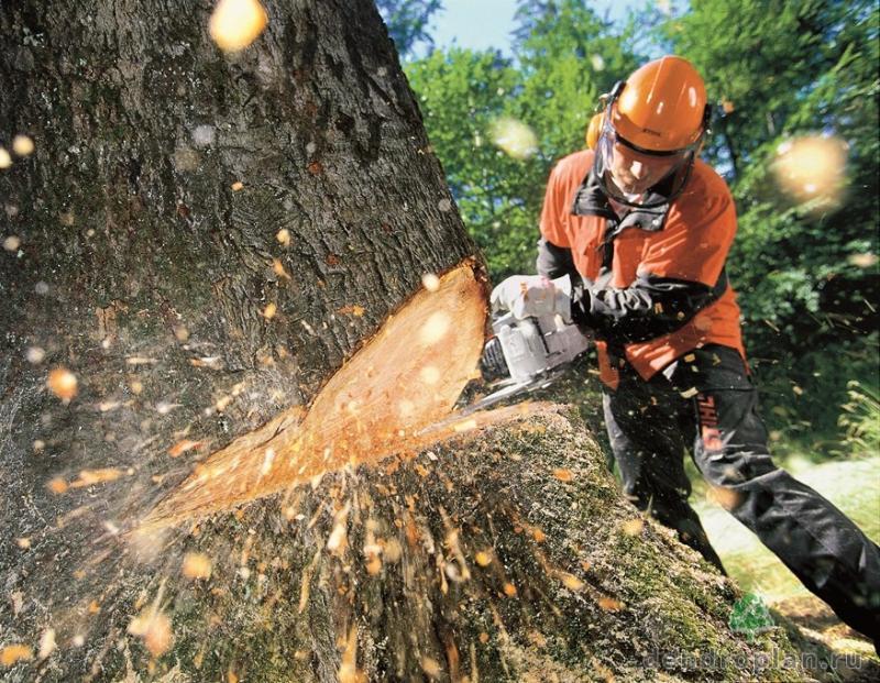 Sečnja in spravilo lesa iz gozda Cveto Voler s.p.