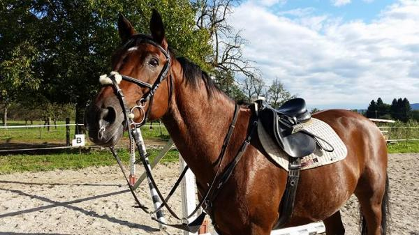 Konjeniški klub pr' Kral