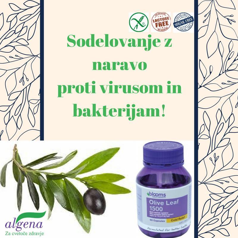 -20% & gratis poštnina: kapsule Olive Leaf Blooms - z naravo proti virusom!