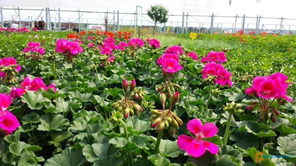 Vrtnarija in cvetličarna Grdadolnik