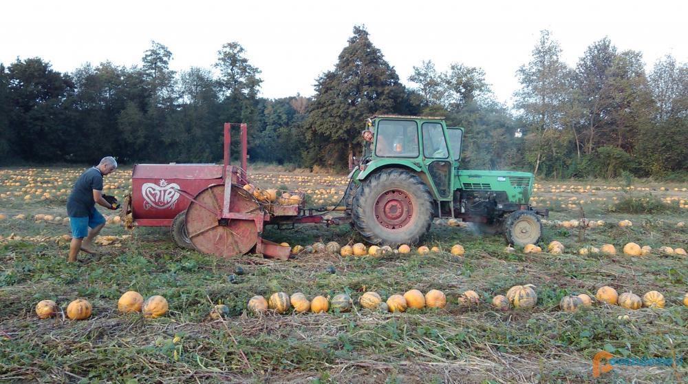 MIR Grünt - Eko etična pridelava hrane