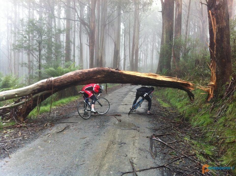 Pro Bike & Ski Servis