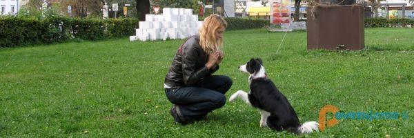 Pasji Dnevi, pomoč pri vzgoji psov, Valentina Horvat Kokalj s.p.
