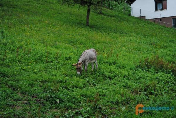 Kmetija Klančnik