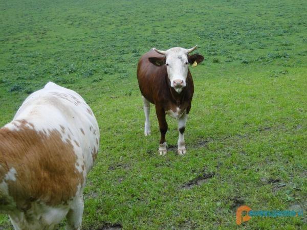 Turistična kmetija Žurej - Ječovo