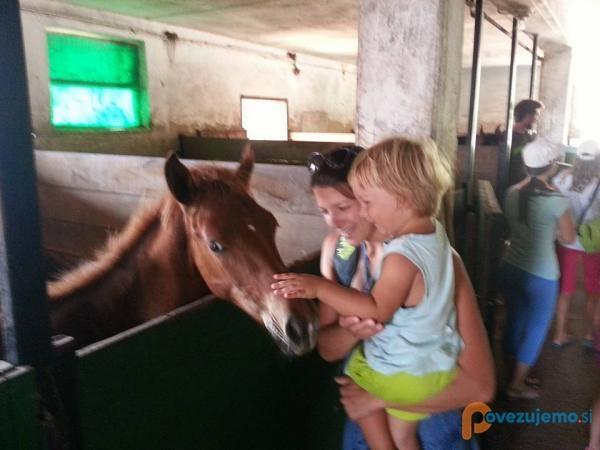 Spoznavanje s konji