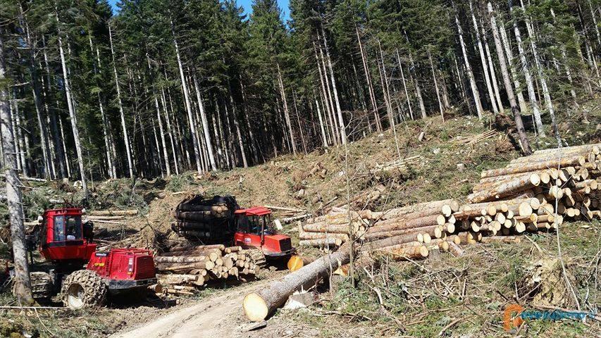 Gladio d.o.o., gozdarstvo, kmetijstvo, odkup in prodaja lesa