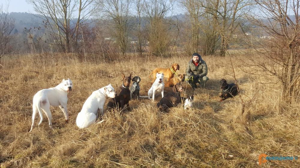 Lepo vzgojen pes, Lea Leskošek s.p.