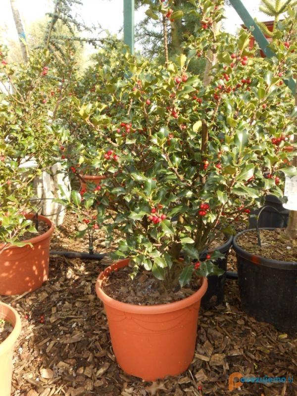 Vrtnarstvo Šimenc d.o.o., vrtnarija, drevesnica in urejanje vrtov