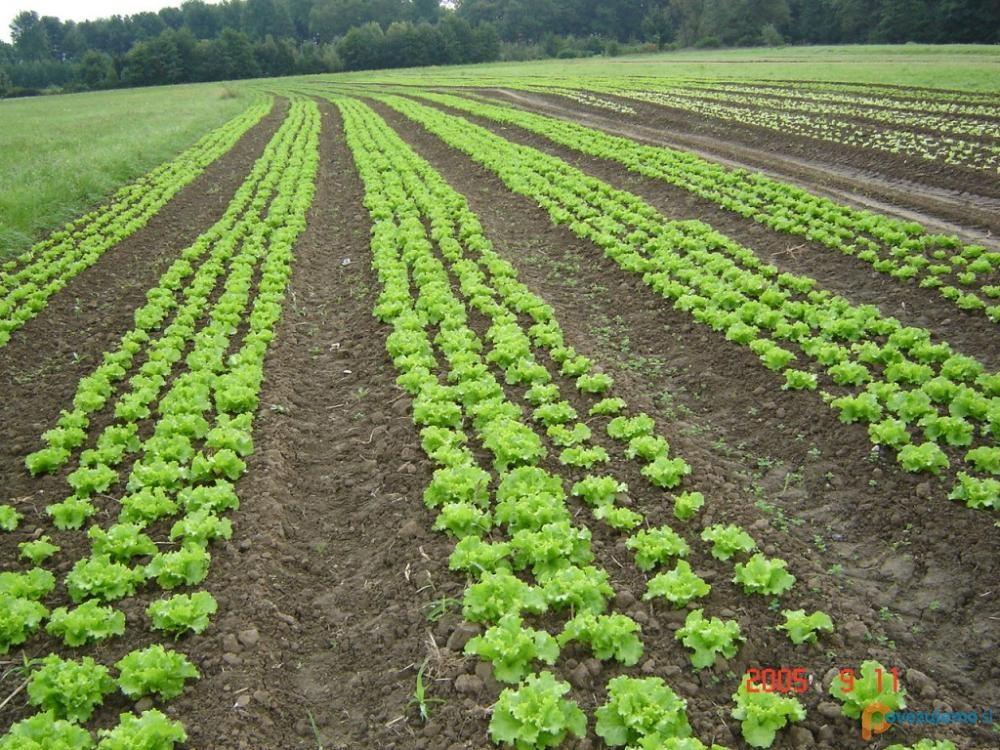 Kmetija Pavlovič