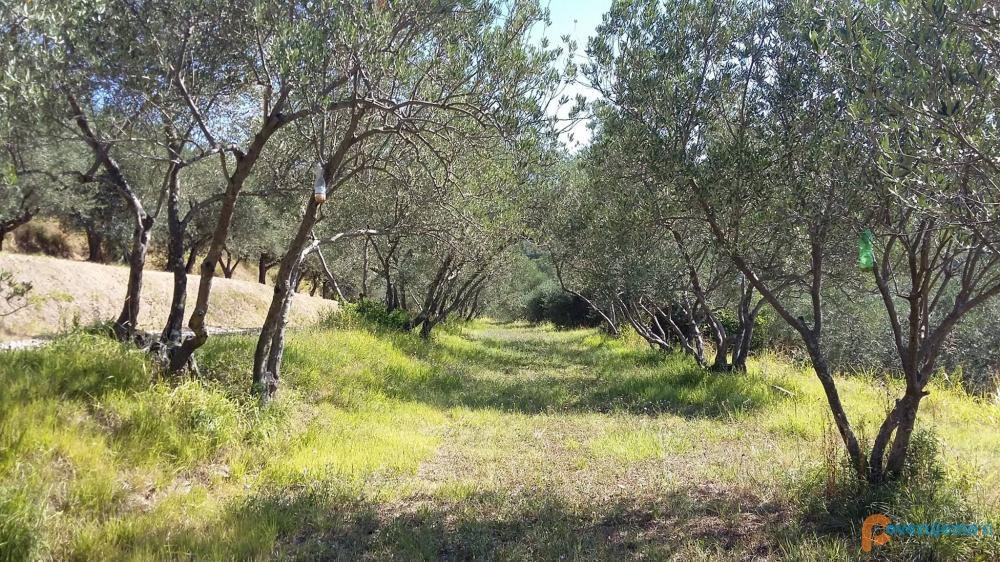 Kmetija Grego