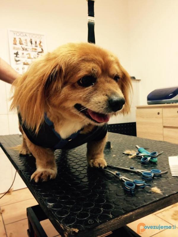 Pasji salon Don - Dog