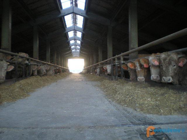 Kmetija Cigüt d.o.o.Kmetija Cigüt d.o.o.
