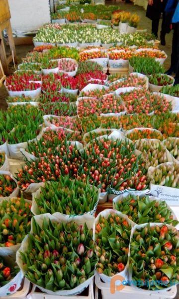 Agrokor d.o.o., veleprodaja cvetja