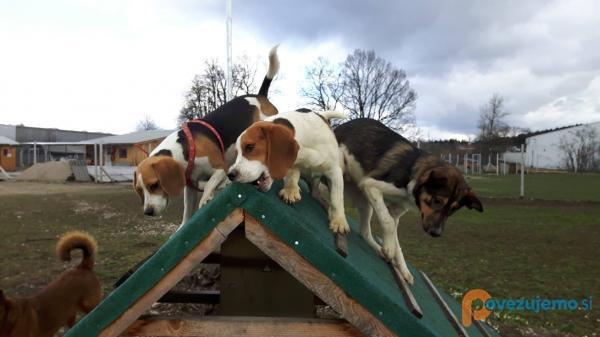 Canis Canis, varstvo in šolanje psov