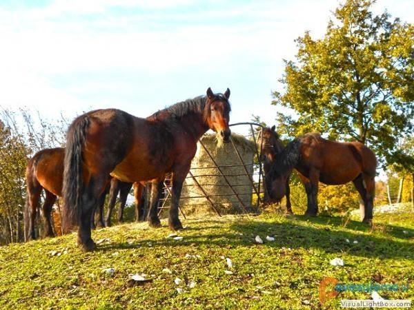 Turistična kmetija Pri Andrejevih
