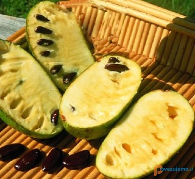 Asimina Fruit - Indijska banana, Akvaristika d.o.o.