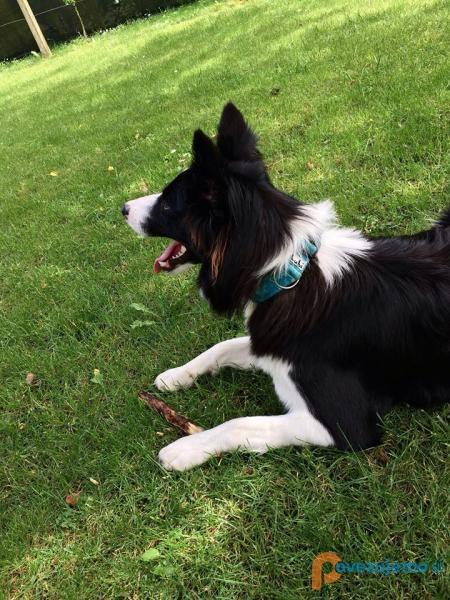 Lubi, oblačila in ovratnice za pse